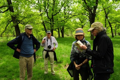 Observing wildflowers in Transylvania